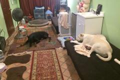 fays-loving-pet-care-dog-cat-boarding-care-tarzana-ca-12