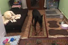 fays-loving-pet-care-dog-cat-boarding-care-tarzana-ca-13
