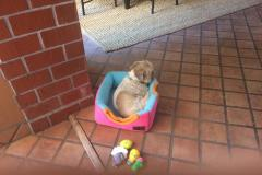 fays-loving-pet-care-dog-cat-boarding-care-tarzana-ca-18