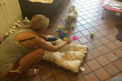 fays-loving-pet-care-dog-cat-boarding-care-tarzana-ca-19