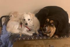 fays-loving-pet-care-dog-cat-boarding-care-tarzana-ca-23