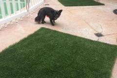 fays-loving-pet-care-dog-cat-boarding-care-tarzana-ca-25