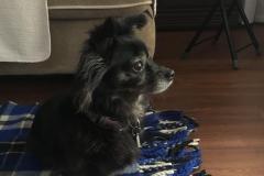 fays-loving-pet-care-dog-cat-boarding-care-tarzana-ca-26