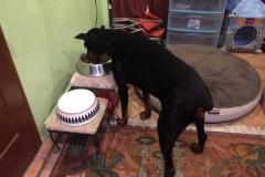 fays-loving-pet-care-dog-cat-boarding-care-tarzana-ca-30