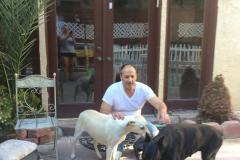 fays-loving-pet-care-dog-cat-boarding-care-tarzana-ca-34