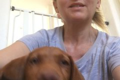 fays-loving-pet-care-dog-cat-boarding-care-tarzana-ca-6
