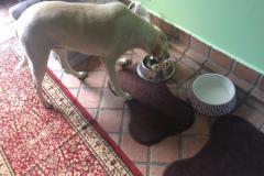 fays-loving-pet-care-dog-cat-boarding-care-tarzana-ca-7