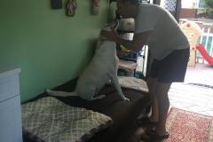 fays-pet-care-boarding-dog-cat-daycare-tarzana-ca-3