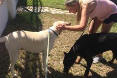 fays-pet-care-boarding-dog-cat-daycare-tarzana-ca-8