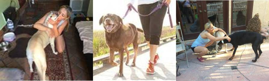 Dog sitting and walking service in Tarzana and San Fernando Valley, California