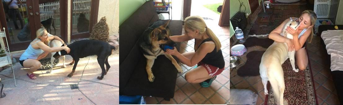 About Fay - Fay's Loving Pet care dog and cat day care sitting Tarzana California